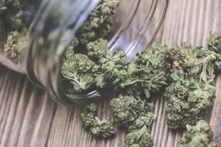 Cannabis, depressione e suicidio: adolescenti a rischio
