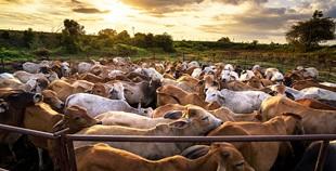Consumo di carne, salute e ambiente